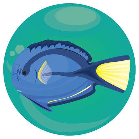A blue tang fish illustration. 向量圖像