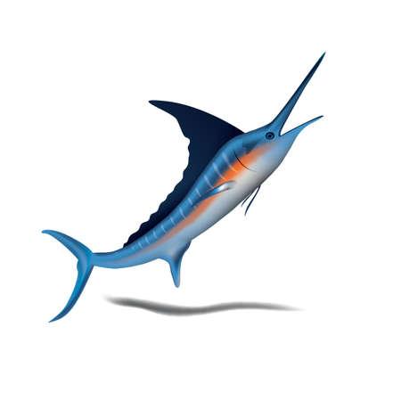 ブルーマーリン魚  イラスト・ベクター素材