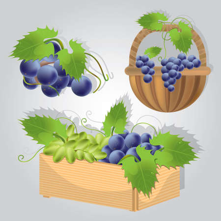 collection of grapes in basket Illustration