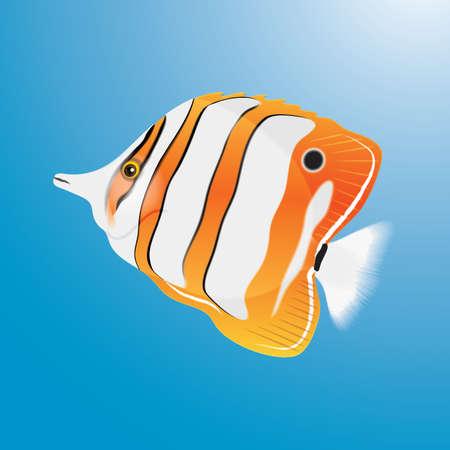 fish 版權商用圖片 - 106670500