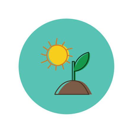 sapling with sun