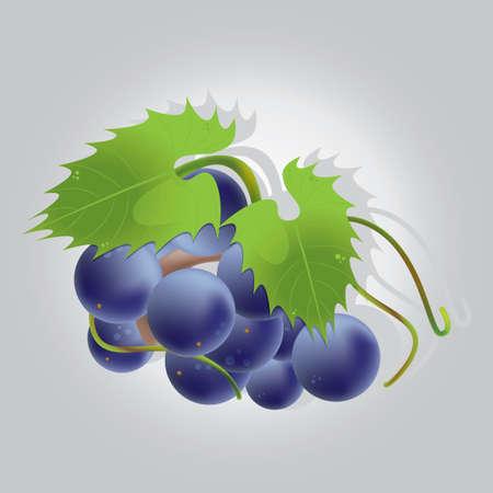 Cacho de uvas Foto de archivo - 81537456