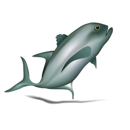 魚のイラスト。  イラスト・ベクター素材