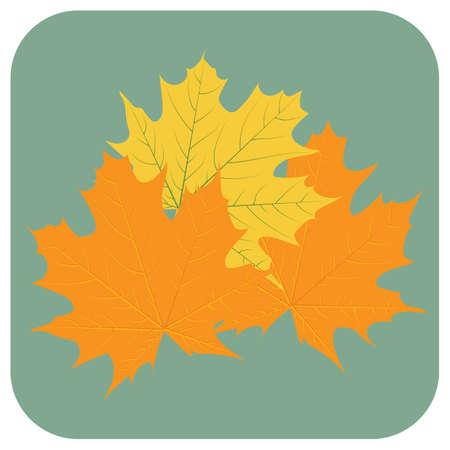 leaves Çizim