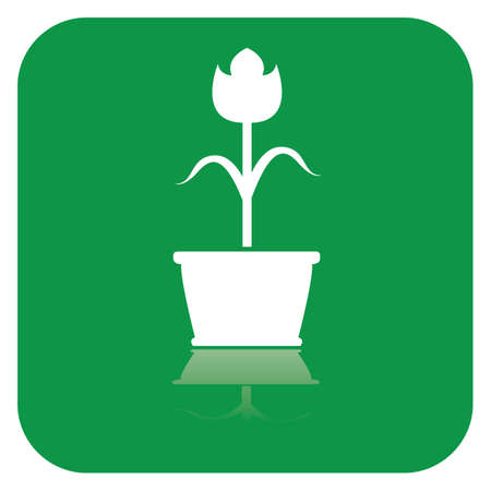 Blume im Topf Standard-Bild - 81419007