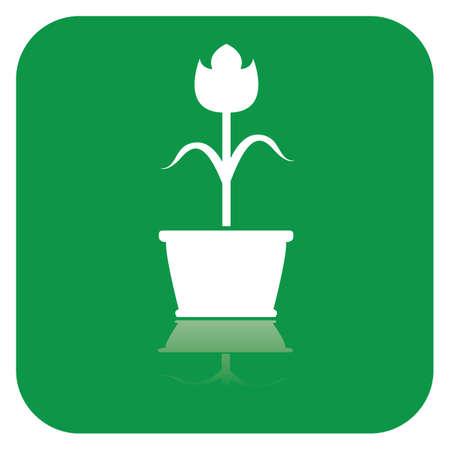 Fleur en pot Banque d'images - 81419007