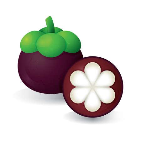 mangostano: mangosteen Vettoriali