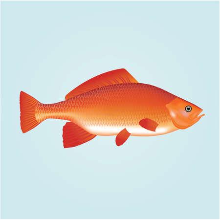 fish 版權商用圖片 - 81470618
