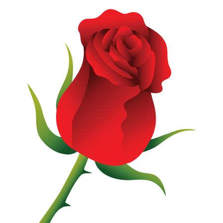 rose flower Standard-Bild - 106671021
