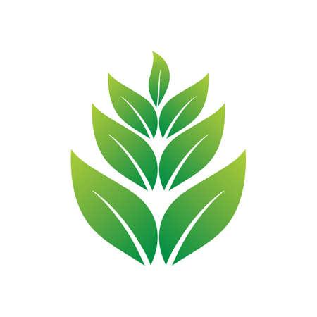 leaves Ilustracja