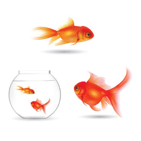 Satz von Goldfischen Standard-Bild - 81538233