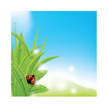 新鮮な草の図のてんとう虫。
