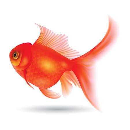 goldfish 向量圖像