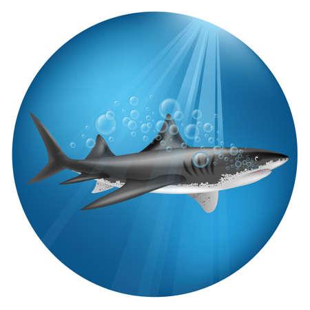 상어 수 중 그림입니다.