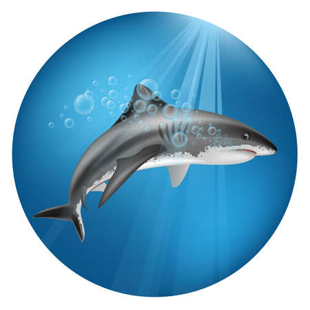 A shark underwater illustration.