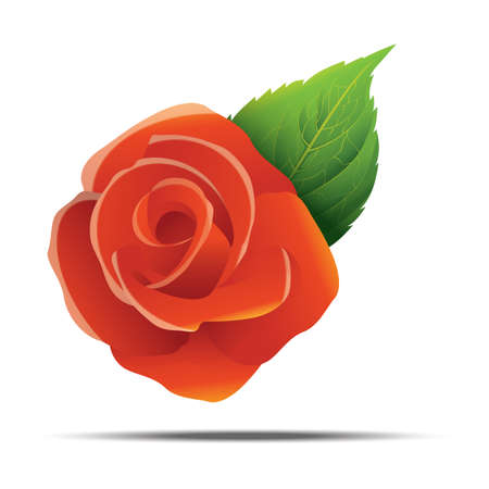 rose flower Ilustrace