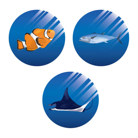 aquatic animals collection