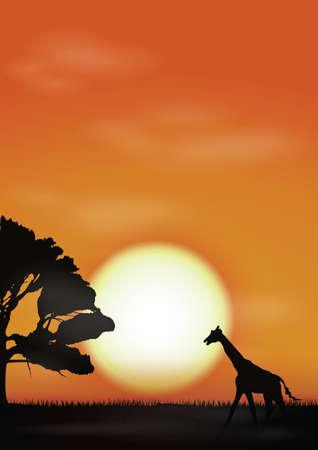 giraffe on sunset background
