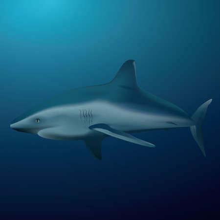 A shark illustration.