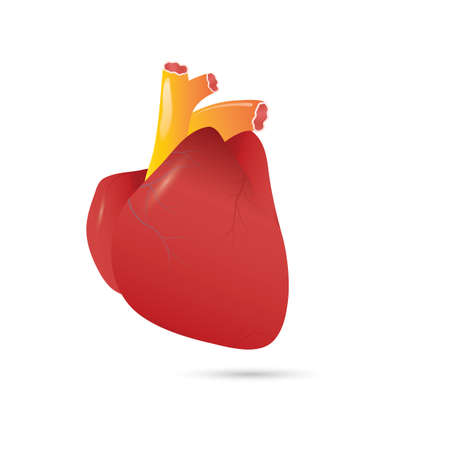 A simple human heart illustration.