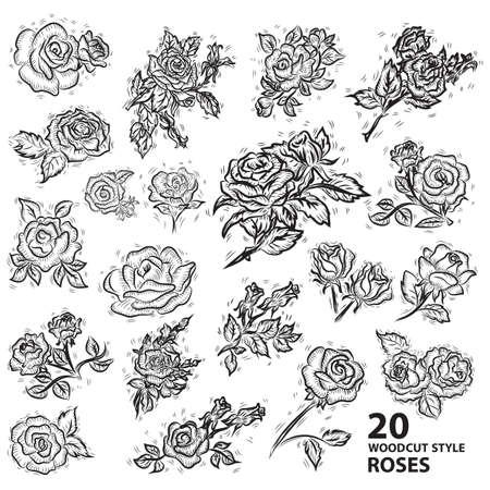 Conjunto de rosas