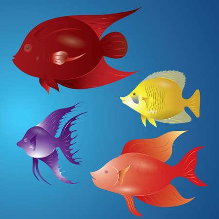 魚のセット