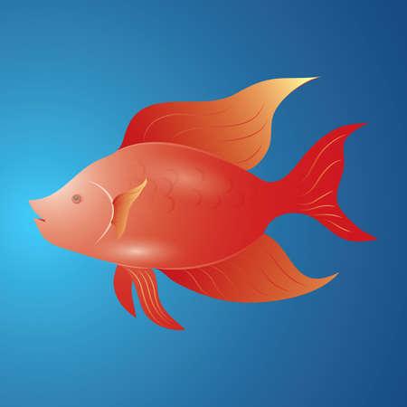赤魚のイラスト。  イラスト・ベクター素材