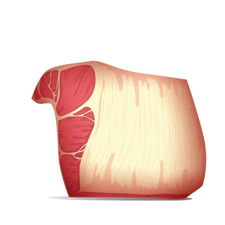 meat Illustration