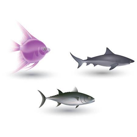 水生動物コレクション