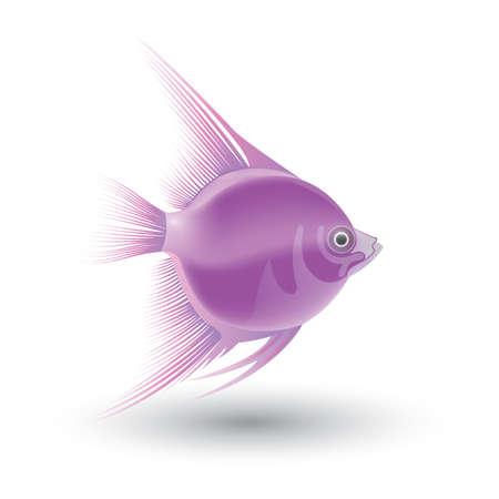 魚 写真素材 - 81536183