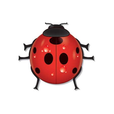 ladybug  イラスト・ベクター素材