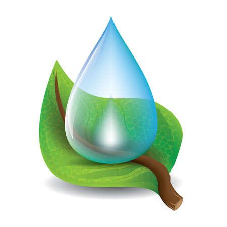 liść z kroplą wody