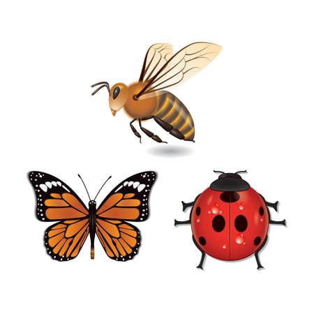 zestaw owadów