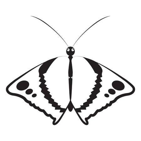 나비 스톡 콘텐츠 - 81536285