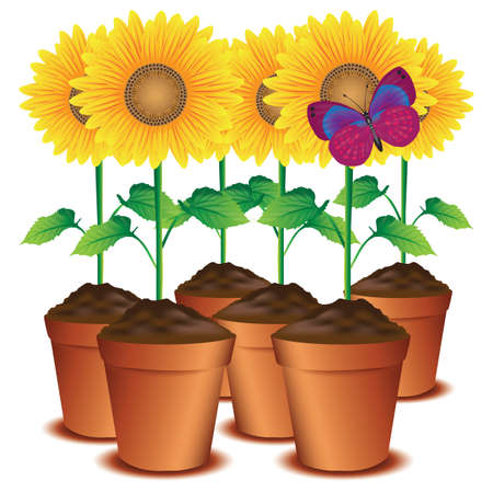 sunflower pots with a butterfly