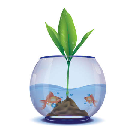 plant in a fish bowl