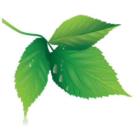 leafs Illustration