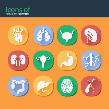 icons of human internal organs
