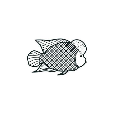 Green humphead parrotfish Illustration