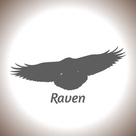 Silhouette of a raven