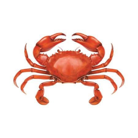 crab Imagens - 76965905