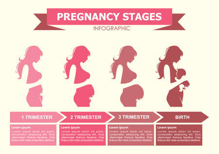 pregnancy stages infographic