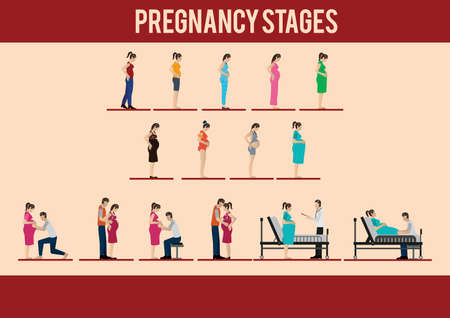 Pregnancy stages.