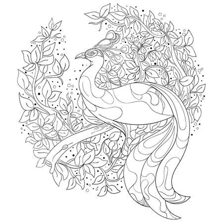 Intricate peacock design coloring book vector Illustration