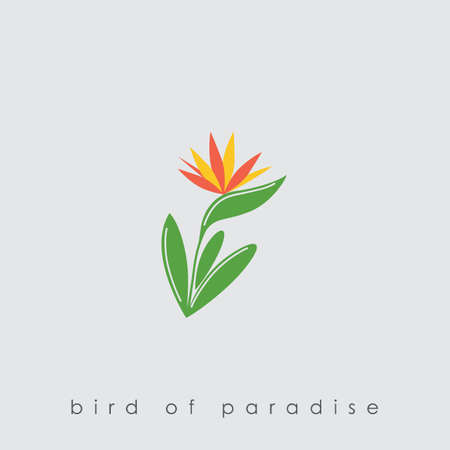 Bird of paradise plant Illustration