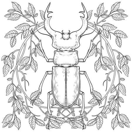 stag beetle design