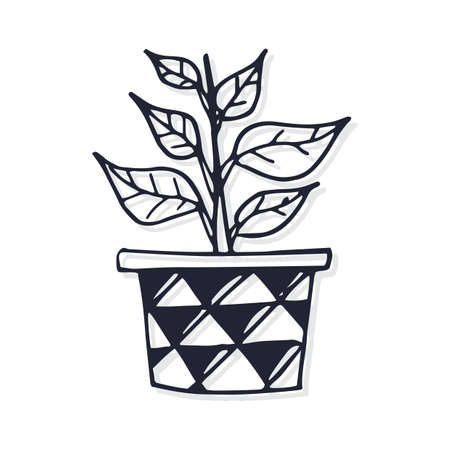 Potted desert plant Illustration