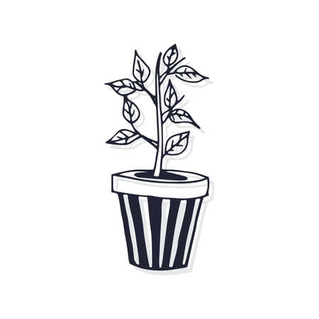 Topfpflanze Standard-Bild - 77246475