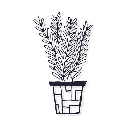 Topfpflanze Standard-Bild - 77251598