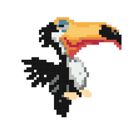 toucan Çizim
